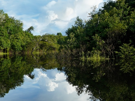 Reflections of Amazon river, Brazil Stock Photo - 9630750