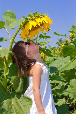 Child on field. Little girl looking at sunflower photo