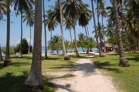 Palm trees on tropical beach Stock Photo - 10922352