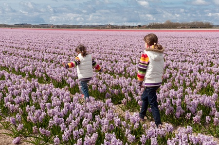 dutch girl: Children playing on beautiful hyacinth field in Netherlands  Little girls having fun in colorful spring flowers  Spring vacation