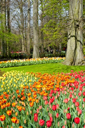 Beautiful spring flowers in Keukenhof park in Netherlands  Holland  Stock Photo - 13346927