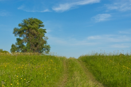 Beautiful country road, green meadow. Spring nature, idyllic landscape Stock Photo - 13760223