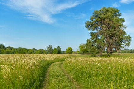 Beautiful country road, green meadow. Spring nature, idyllic landscape photo