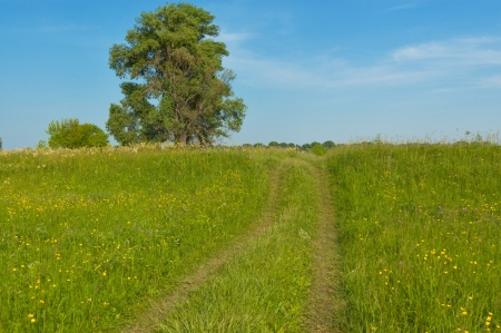 Beautiful country road, green meadow  Spring nature, idyllic landscape photo