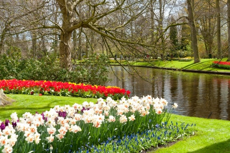Beautiful spring flowers in Keukenhof park in Netherlands  Holland  photo