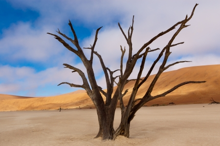 sossusvlei: Landscape of Dead Vlei, Sossusvlei, Namib desert  Namibia, South Africa Stock Photo