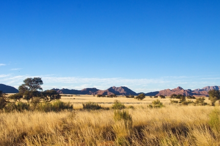africa safari: African savanna landscape, Namibia, South Africa