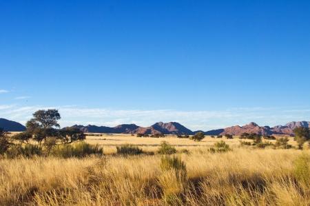 praterie: Paesaggio africano savana, Namibia, Sud Africa