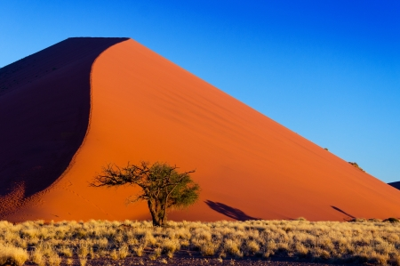 namibia: African landscape, beautiful sunset dunes and nature of Namib desert, Sossusvlei, Namibia, South Africa