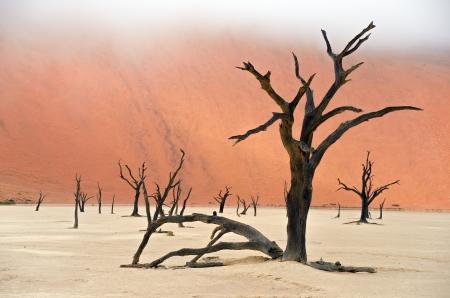 arboles secos: Paisaje de Dead Vlei, Sossusvlei, desierto de Namib, Namibia, África del Sur