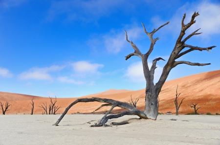vlei: Landscape of Dead Vlei, Sossusvlei, Namib desert, Namibia, South Africa Stock Photo