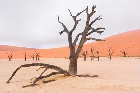 toter baum: Landscape of Dead Vlei, Namib-Wüste, Sosussvlei, Namibia, Südafrika Lizenzfreie Bilder