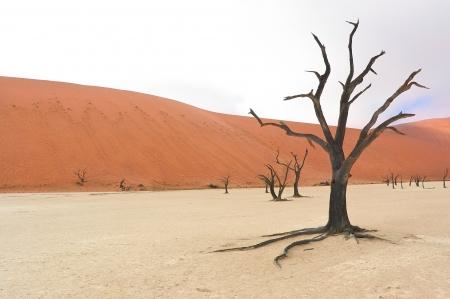 arboles secos: Paisaje de Dead Vlei, Namib, Sosussvlei, Namibia, ?frica del Sur