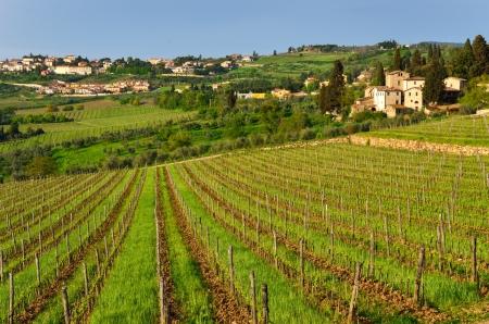 chianti: Beautiful Chianti landscape, Tuscany, Italy