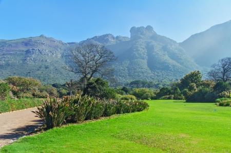 botanical gardens: Kirstenbosch botanical gardens, Cape Town, South Africa