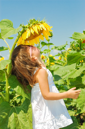 Little girl smells sunflower photo