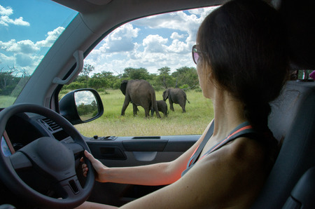 Woman on safari car vacation in South Africa, looking at elephant photo