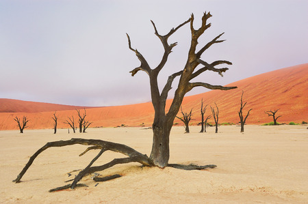 Trees and landscape of Dead Vlei desert in Namibia, South Africa photo
