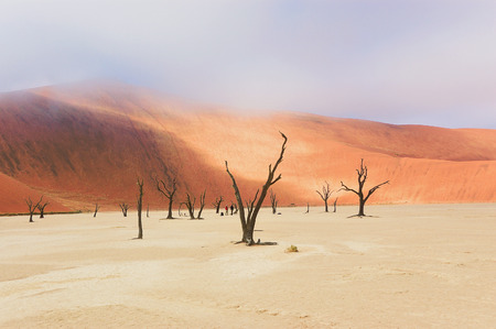 vlei: Trees and landscape of Dead Vlei desert in Namibia, South Africa