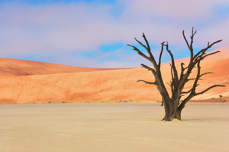 vlei: Tree and landscape of Dead Vlei desert in Namibia, South Africa