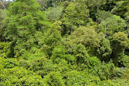sfondo giungla: Sfondo Rainforest giungla