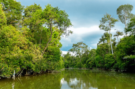 river banks: Kinabatangan river, Malaysia, rainforest of Borneo island Stock Photo