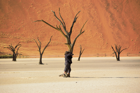 vlei: Trees and landscape of Dead Vlei desert, Namibia, South Africa