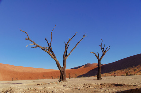 Trees and landscape of Dead Vlei desert, Namibia, South Africa photo