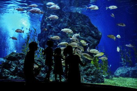 Silhouetten van een gezin met twee kinderen in oceanium, kijken naar vissen in het aquarium Stockfoto
