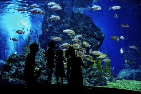 zoologico: Siluetas de familia con dos hijos en el oceanario, mirando a los peces en el acuario