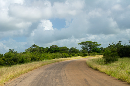 south africa soil: African road in savanna, South Africa, Kruger national park