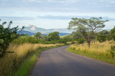 kruger national park: African road in savanna, South Africa, Kruger national park