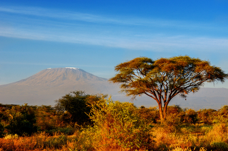 nature: Beautiful Kilimanjaro mountain after sunrise in morning, Kenya,Amboseli national park, Africa