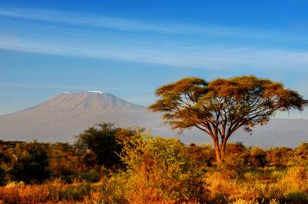 the national flag of kenya: Hermoso de la montaña Kilimanjaro después del amanecer en la mañana, Kenia, Parque Nacional de Amboseli, África
