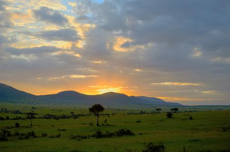 rise: Sunrise in african savanna, Masai Mara national park, Kenya, Africa
