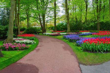 tulip: Piękne wiosenne kwiaty w Keukenhof parku w Holandii (Holandia)