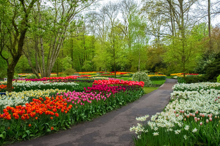 keukenhof: Beautiful spring flowers in Keukenhof park in Netherlands (Holland)