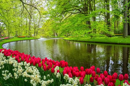 ornamental: Beautiful spring flowers near pond in Keukenhof park in Netherlands (Holland) Stock Photo