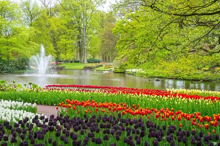 landscape flowers: Beautiful spring flowers near pond in Keukenhof park in Netherlands (Holland) Stock Photo