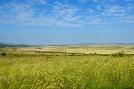 the national flag of kenya: paisaje de la sabana africana, Parque Nacional Masai Mara, Kenia, África Foto de archivo