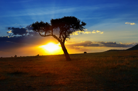 rise: Beautiful sunrise or sunset in african savanna with acacia tree, Masai Mara national park, Kenya, Africa Stock Photo