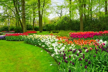 オランダ (オランダ) でキューケンホフ公園の美しい春の花