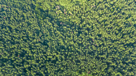 Aerial top view of green forest landscape from above, pine trees green nature background