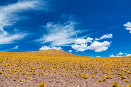 Atacama Altiplana desert savanna  and mountains landscape, Miniques, Chile, South America Reklamní fotografie