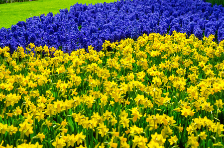Beautiful colorful spring flowers in park in Netherlands (Holland) Reklamní fotografie