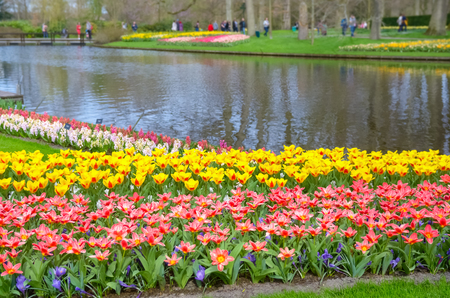 Beautiful colorful spring flowers in park in Netherlands (Holland) Reklamní fotografie - 100818948