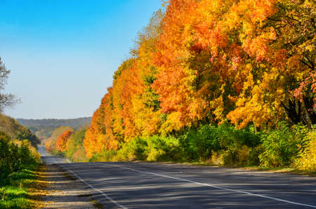 Forest highway road in autumn, scenic view of asphalt road in golden autumn forest with yellow trees