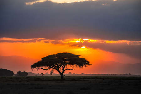 Beautiful sunrise or sunset in african savanna with acacia tree, Masai Mara national park, Kenya, Africa Standard-Bild