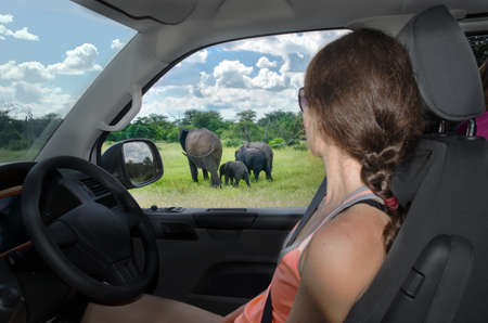 Woman in safari car vacation in South Africa, looking at elephant in savannah, african animals game drive