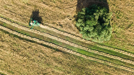 Harvester machine working in field aerial view from above, combine harvester agriculture machine harvesting ripe wheat field
